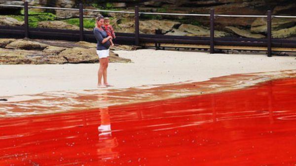 Влада не рекомендують заходити в воду в період цвітіння (фото: news.com.au)