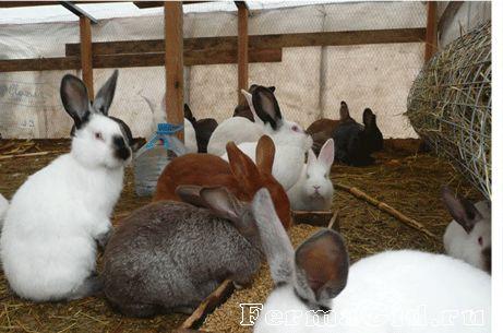 Зміст кроликів у вольєрі