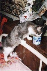 невихований кіт