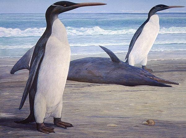 Пінгвіни кайруку і дельфін Waipatia maerewhenua, теж вимерлий (рисунок Chris Gaskin).