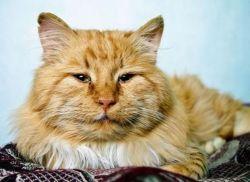 середній вік життя кішок