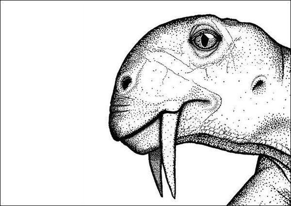 Спроба реконструкції голови Tiarajudens eccentricus (тут і нижче ілюстрації авторів роботи).