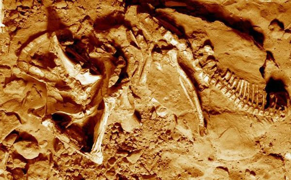 Вперше поряд з останками протоцератопса виявлений його слід