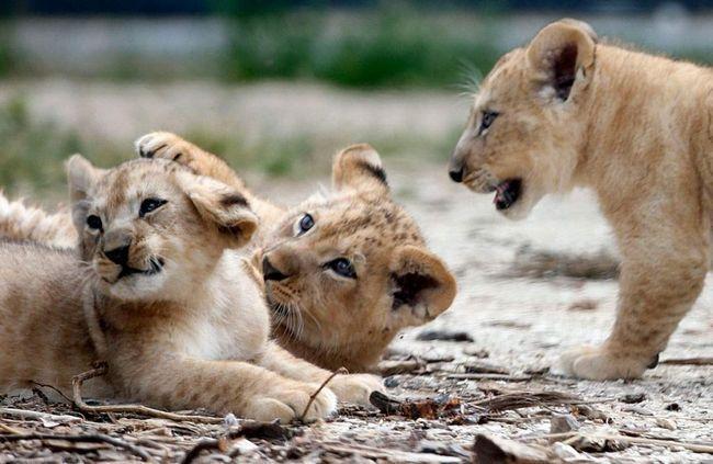 Леви повертаються в Руанду.