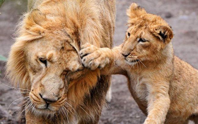 Леви були винищені під час геноциду місцевого населення.
