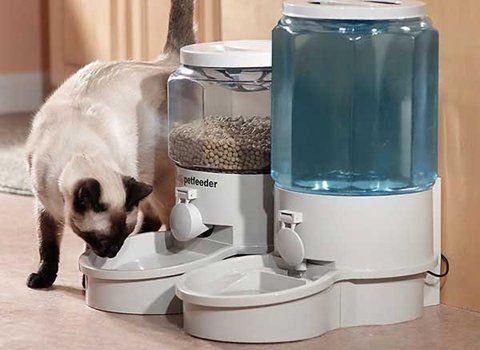 Вибираємо автоматичну годівницю для кішок і відпочиваємо спокійно