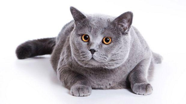 Вибираємо миску для кішок