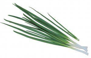 Вирощуємо цибулю на перо: кращі поради по догляду і посадці