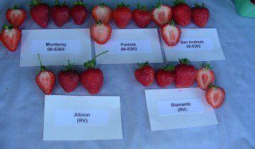 Різні сорти полуниці, inspection.gc.ca