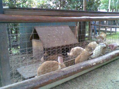 На фото вольєр з кроликами