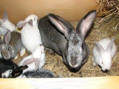 Фото кролячій сім`ї