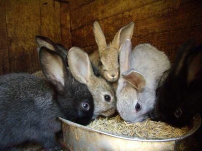 Фотографія сім`ї кроликів