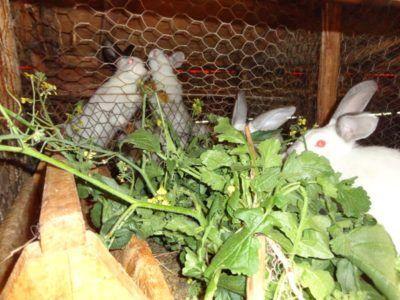 На знімку процес годування кроликів