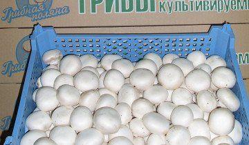 Зберігання печериць в ящику, grib-vip.ru