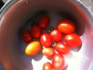 Вирощування томатів відео