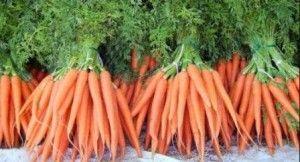 Як правильно посадити морква