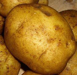Високоврожайні сорти картоплі