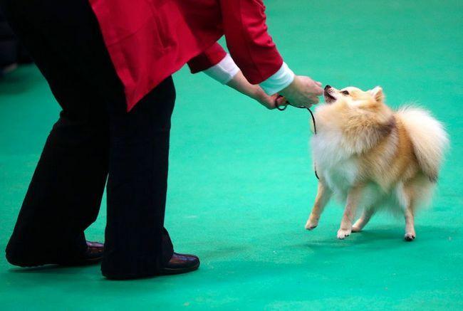 Виставка собак Crufts Dog Show 2015