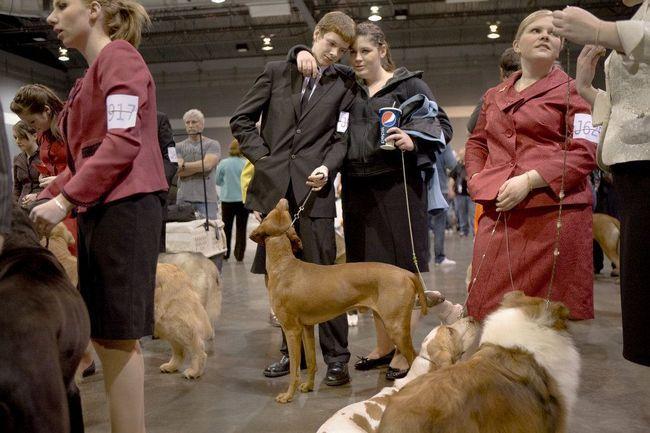 Виставка собак``Rose City Classic``