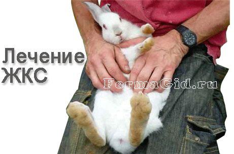 Шлунково-кишковий стаз у кроликів рентген