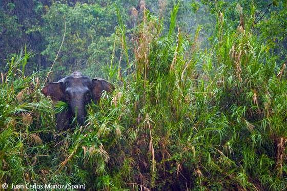Фотографії тварин і природи, які стали переможцями конкурсу Wildlife Photographer 2009.