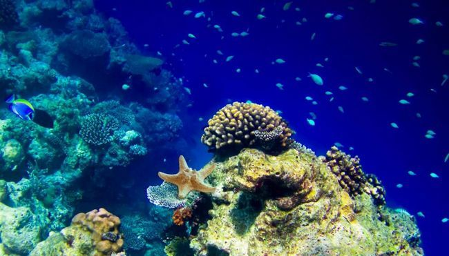 Популяція морських тварин скорочується, починаючи з 1970 року.