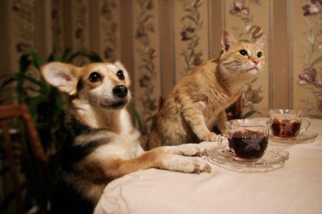 Забавні кішки і їхні друзі