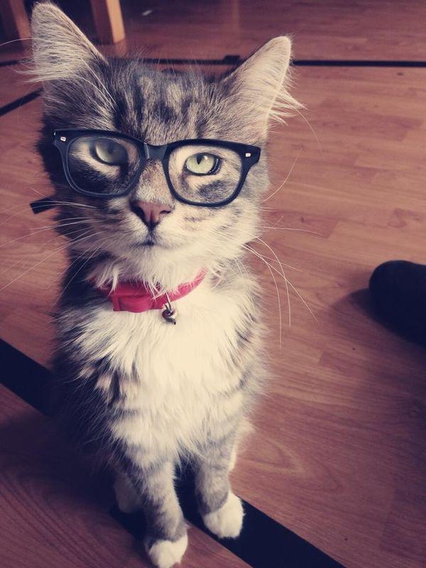 Забавні і дивні наукові дослідження про котів і кішок