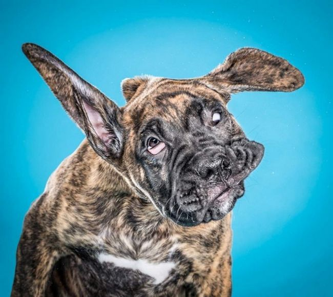 Ханс, 12-тижневий щеня, виглядає стривожено.