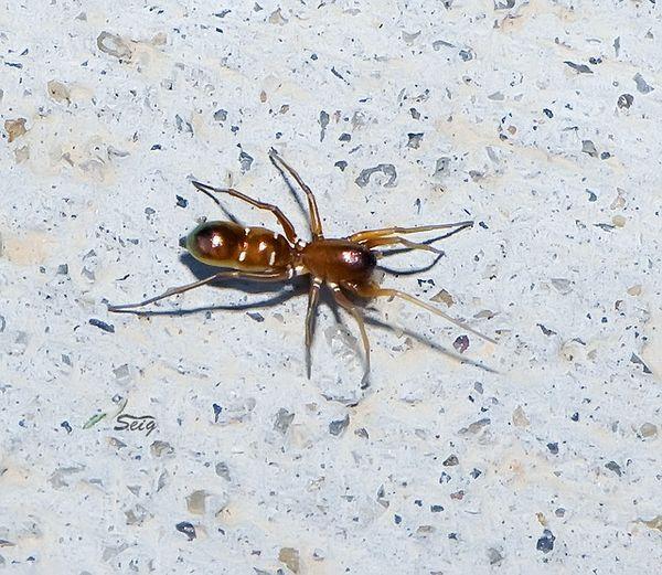 Навіщо комахою погана маскування
