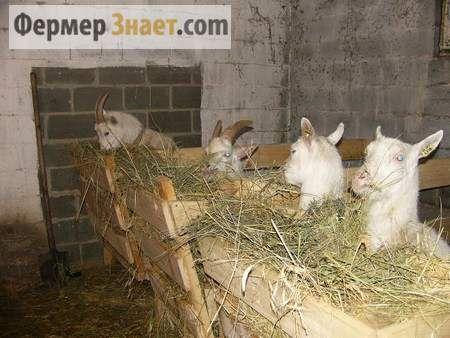 Заготовляємо корми для кози на зиму