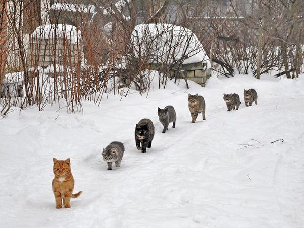 кішки