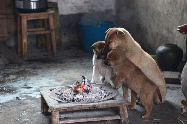 Замерзлі собаки знайшли простий спосіб, щоб зігрітися