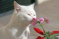 Запахи, що відлякують кішок