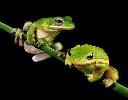 жаби фото