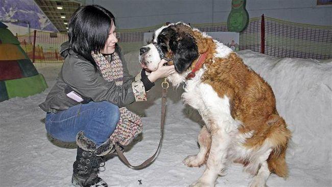 Останній день в житті собаки по кличці Софія.