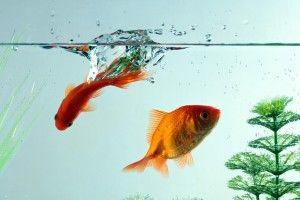 Жорсткість води в акваріумі