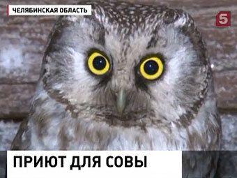 Мешканка челябінської області поселила в курнику мохноногого пугача