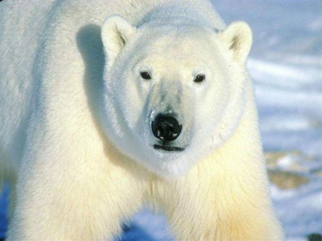 Зоозахисники шукають шкуродера, який кинув собаку у вольєр до ведмедя.