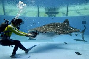 Живий корм для акваріумних риб