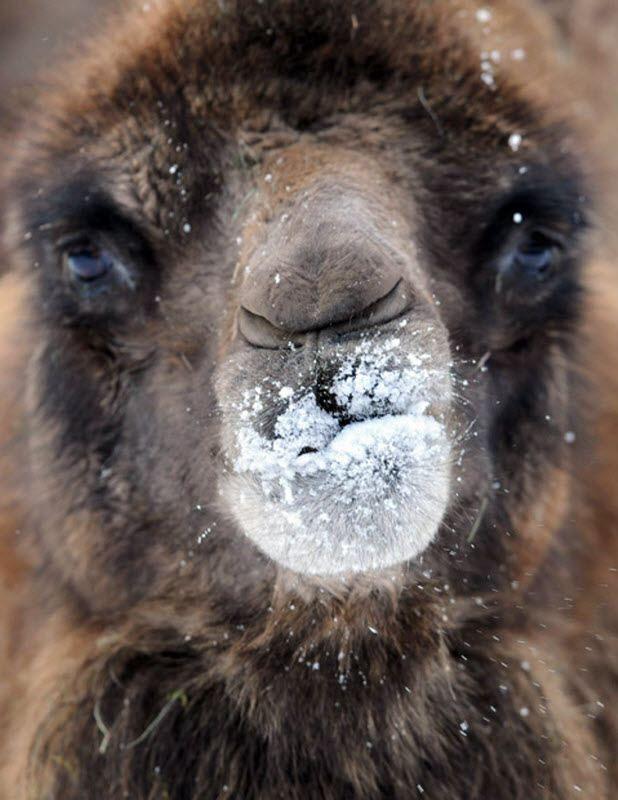 Тварини і перший сніг