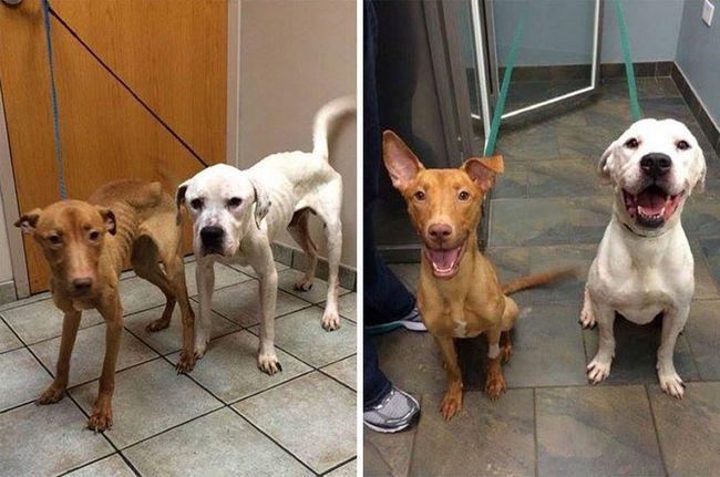 Тварини з притулку: порятунок двох бродячих псів від виснаження