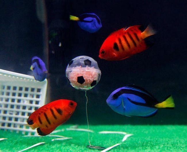 Тварини теж обожнюють футбол