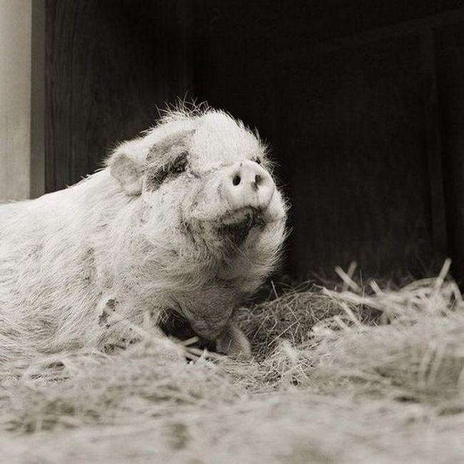 Тварини в похилому віці
