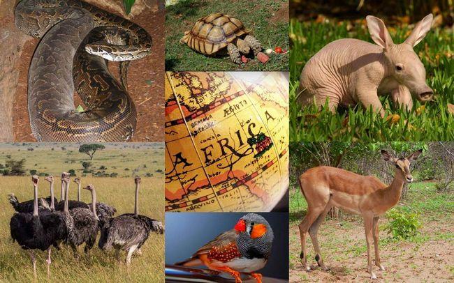 Тваринний світ Африки.
