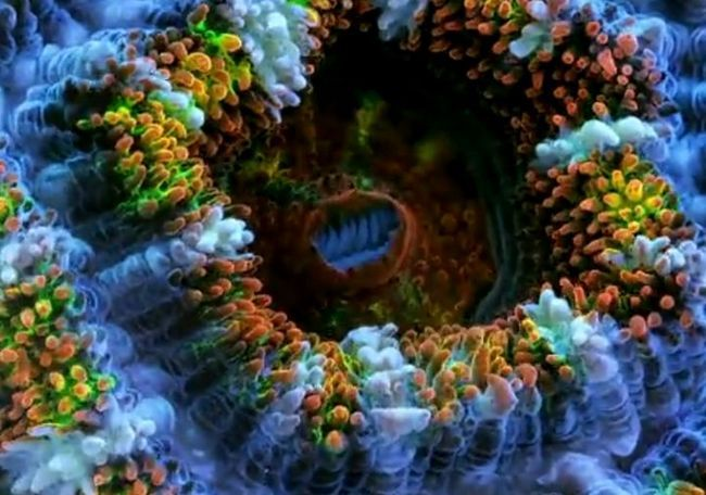 Життя коралів в сповільненій зйомці