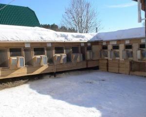 Зимове утримання кроликів