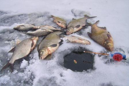 Зимова поплавочная вудка і її оснащення