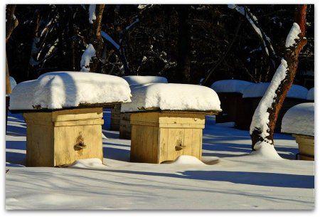 Зимівля бджіл