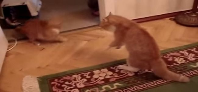 Злий кіт тимофій підкорив youtube